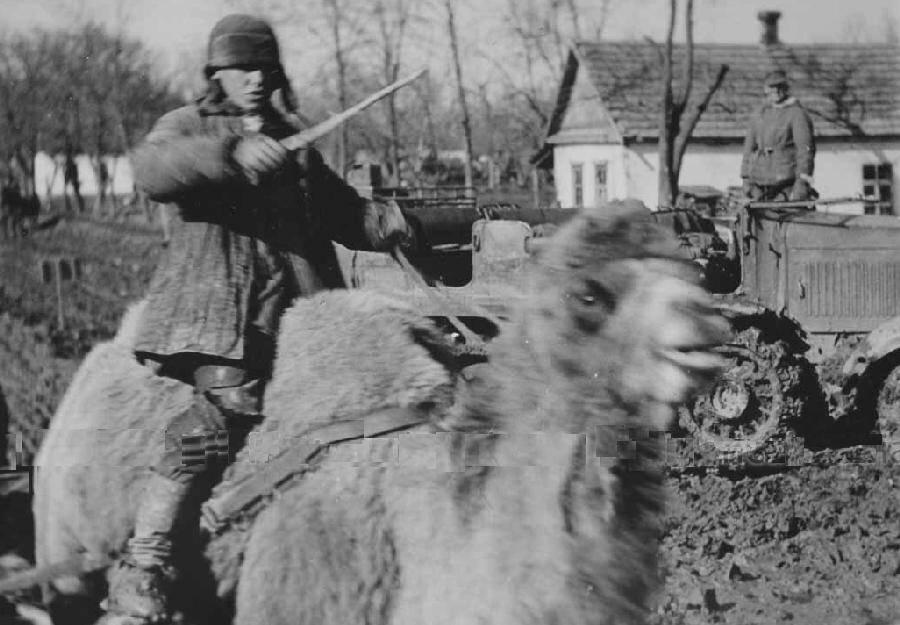 Case Blue Ww2 : World war ii case blue stalingrad forces split