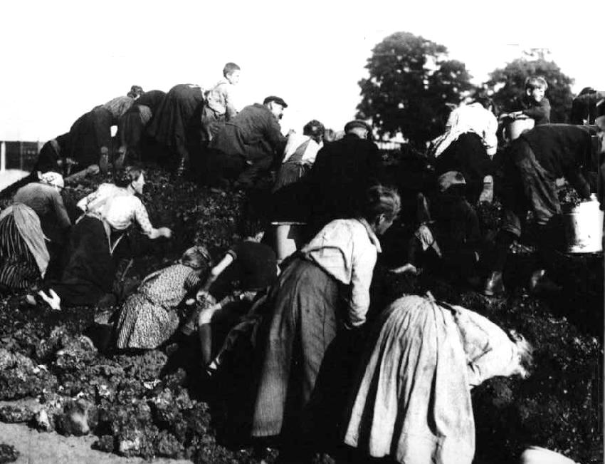 essay on the great depression in germany The depression germany was affected the most by the great depression  agricultural prices fell this brought poverty to the countryside the wall street  crash.