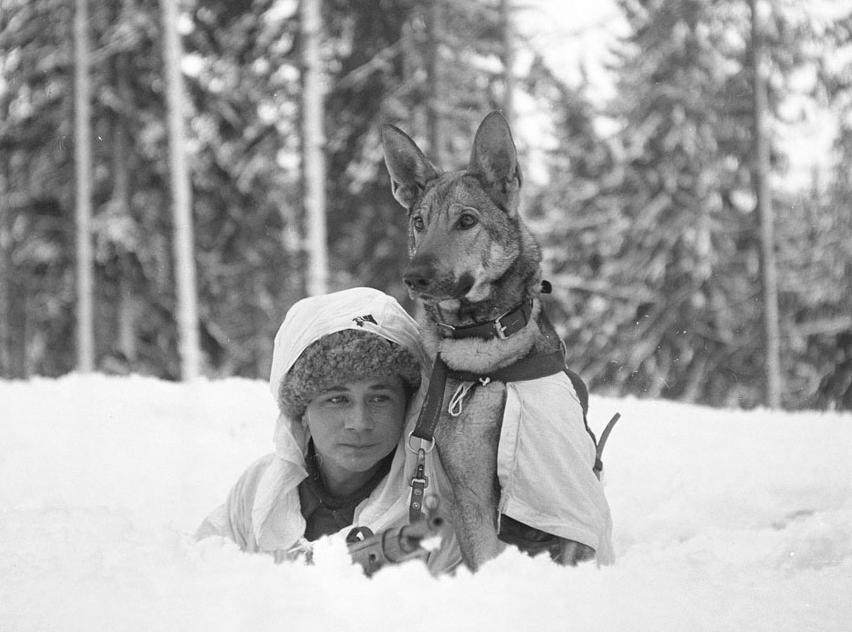 World War II dogs